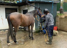 Strength through horses trip 02